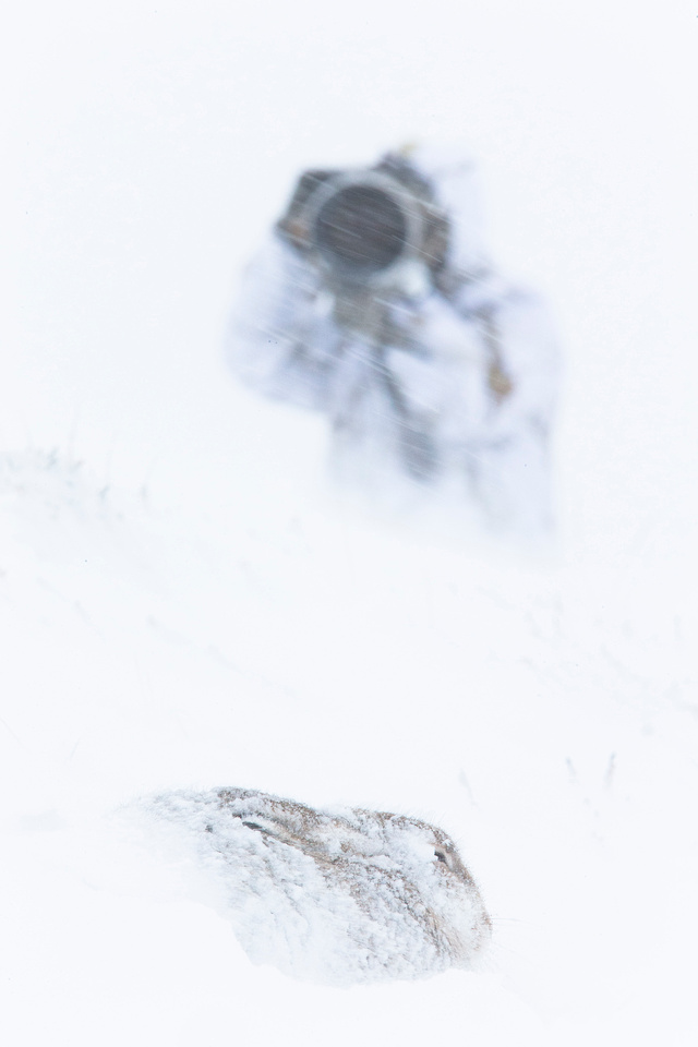Mountain Hare and Photographer